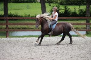 Horsemanship reiten nach Honza Blaha